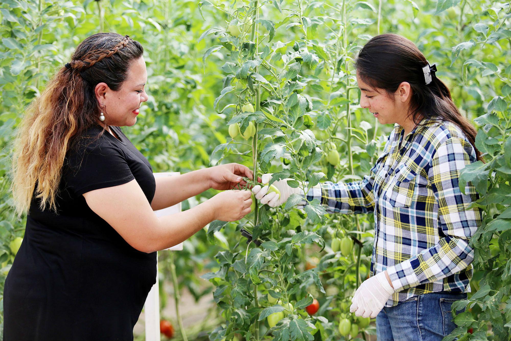 La mujer en la investigación agropecuaria