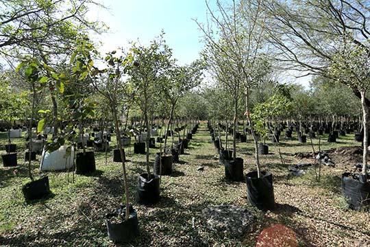 Siembra un árbol, ayuda al ambiente