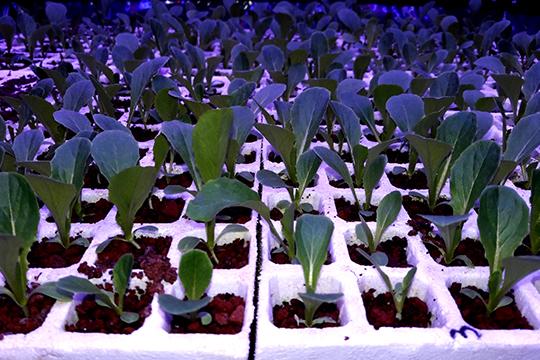 UANL promueve fábricas de cultivos en Monterrey