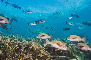 En peligro el 25 por ciento de las especies biológicas del mundo