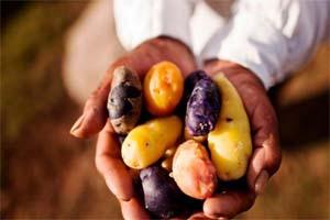 Inseguridad alimentaria impide desarrollo económico y social