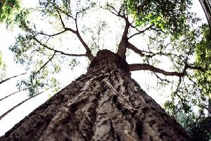 Necesita Nuevo León más árboles nativos