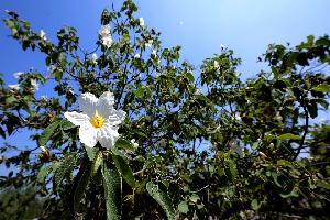 Conserva UANL flora regional en jardines etnobiológicos