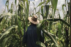 Tiene México tradición de sembradores